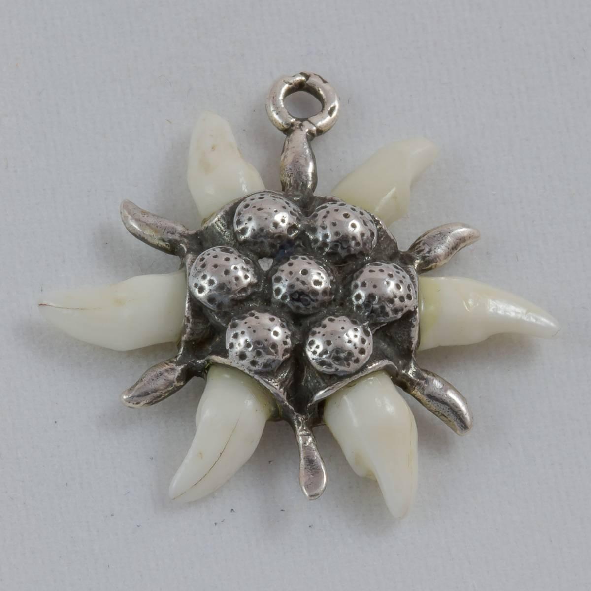 Marder-Edelweiss